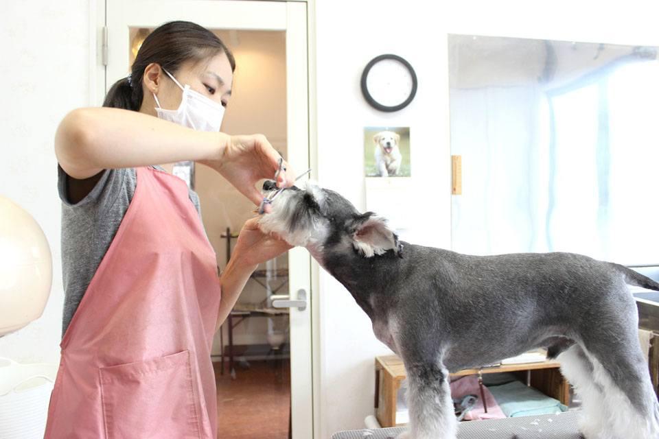 Dog Salon Popolato(ポポラート)