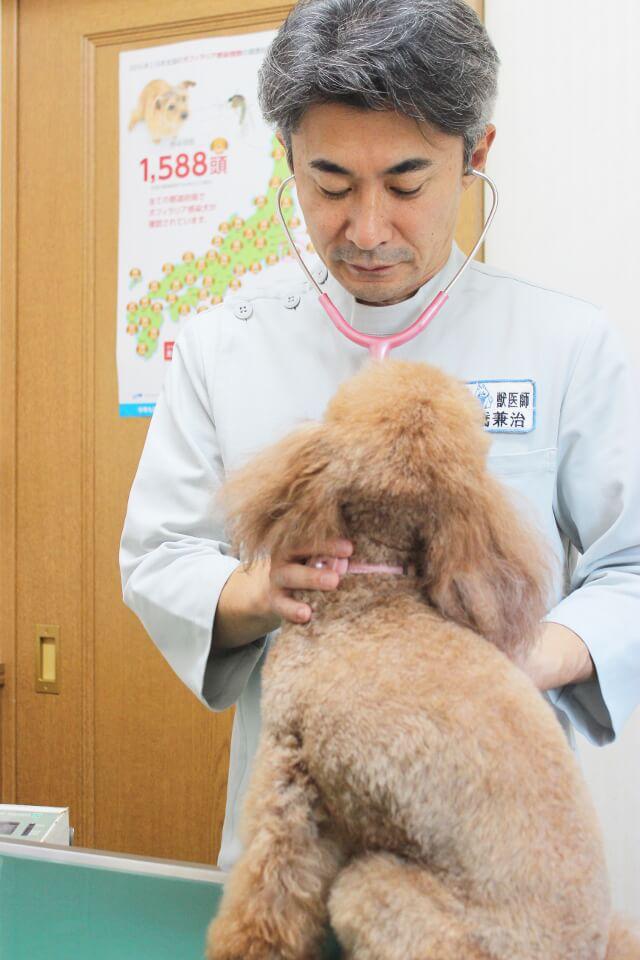 千城台動物病院の診療画像