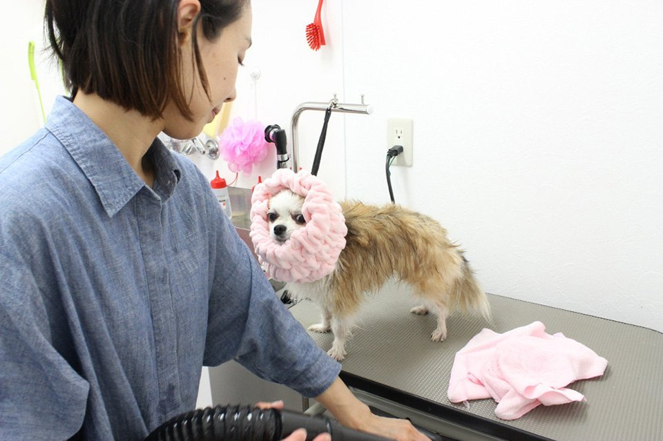 dog salon UNE