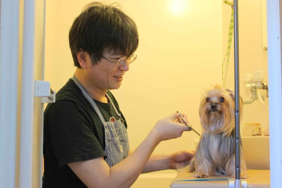 犬と、人と、のトリミング画像