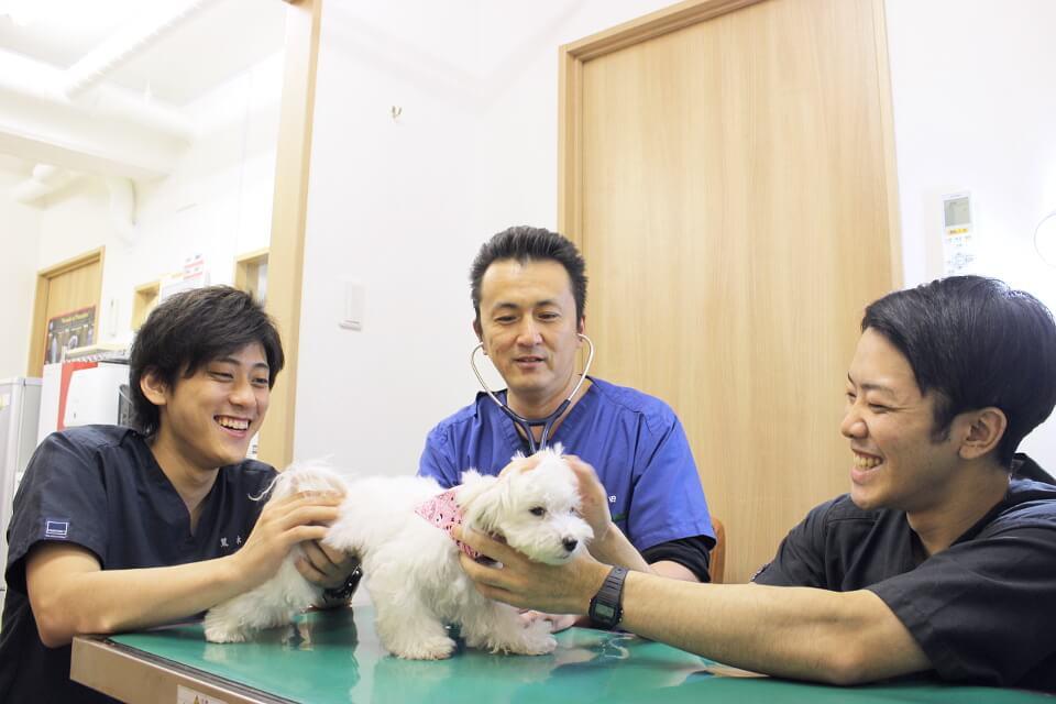 横浜山手犬猫医療センターの診療画像