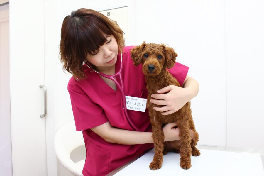 中野区でおすすめの動物病院3選!夜間対応可能施設あり