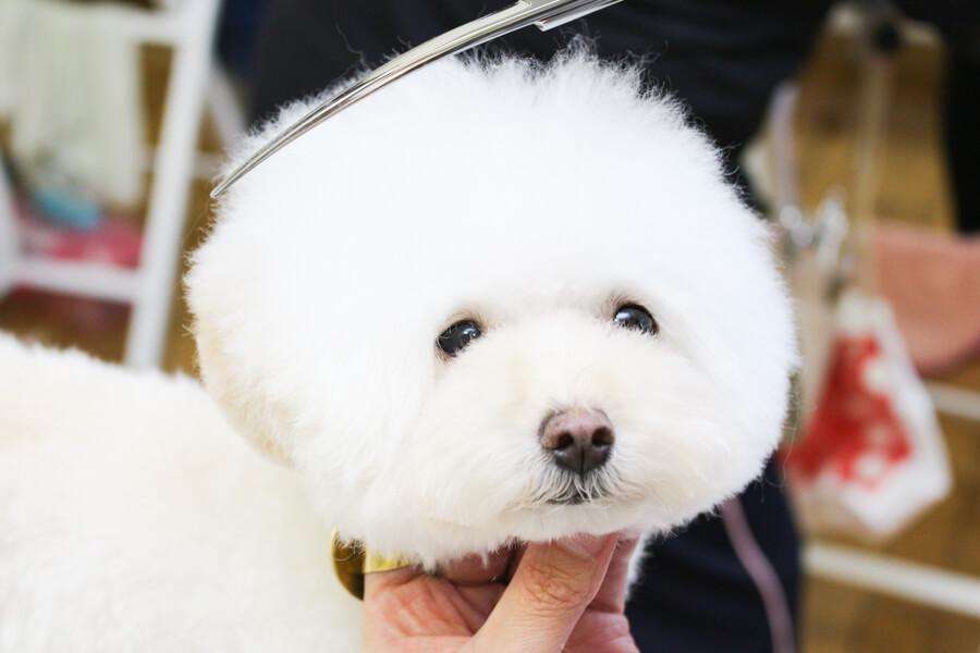 Dog Salon horo horo