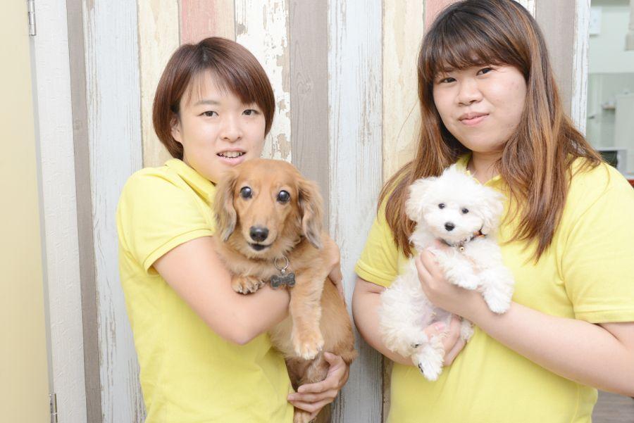 Dog Salon Bow! Wow! 学園前店のメイン画像