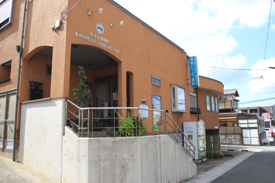 オリーブ動物病院 | ホーム | 川崎市にある動物病 …
