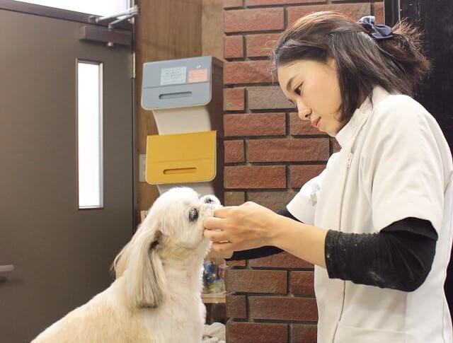 せいた動物病院の診療風景