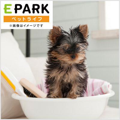 ワンコの美容室 mo-dog