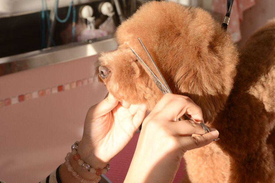 Dog salon nico トリミング中写真