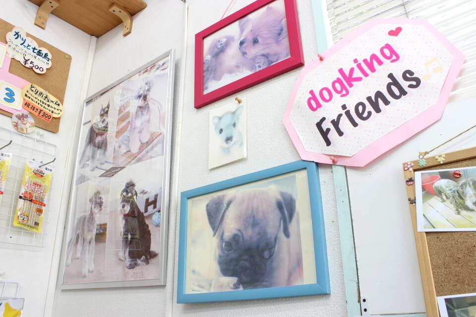 Dogking大船店でキレイになったワンちゃんを紹介しています