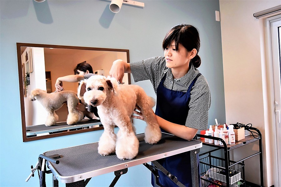 Dog Salon room micc