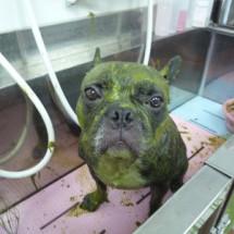 ドッグサロン ララわんのペット画像