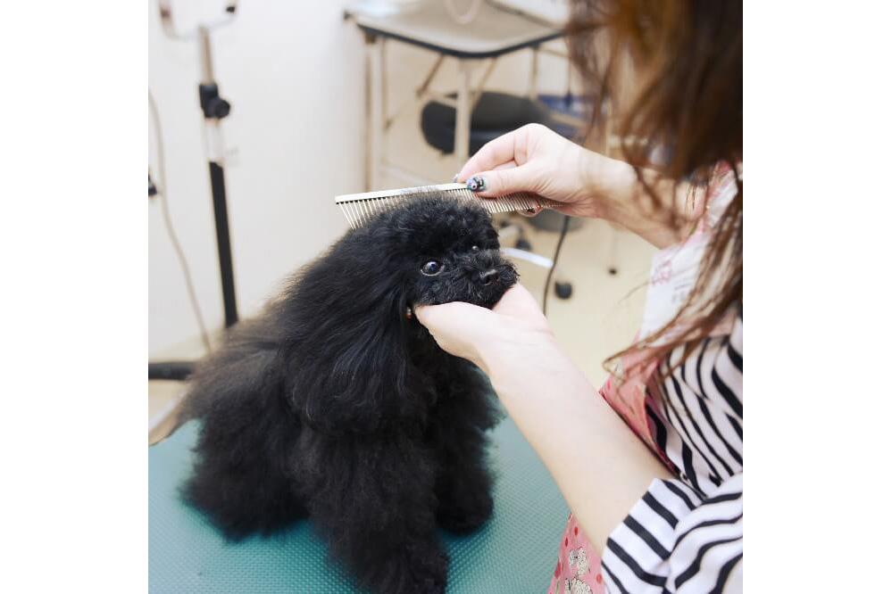 犬の美容室 いちご 中川本店のメイン画像