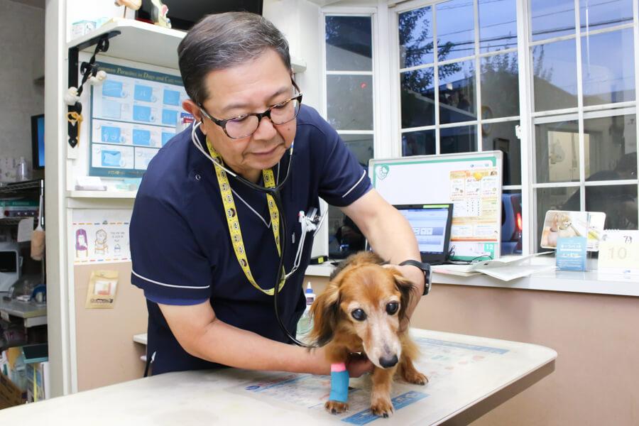 伊藤動物病院の診療方針