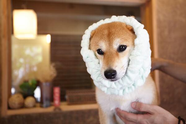 トリミング処 犬の和心