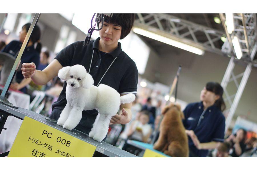 トリミング処 犬の和心のメイン画像
