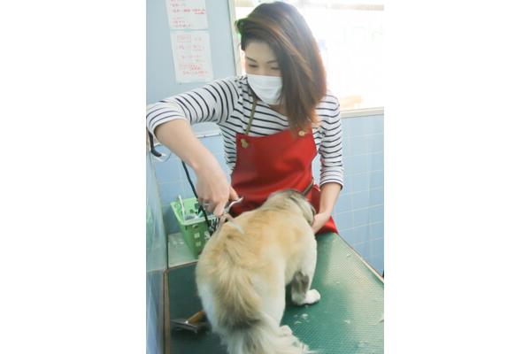 ペットサービス昭和店のメイン画像