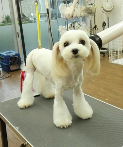 湘南 Dog Collegeのトリミング画像