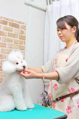Dog salon Blanc