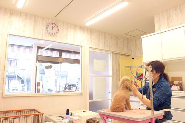 ドッグサロン ケンネル薫 柏店のトリミング画像
