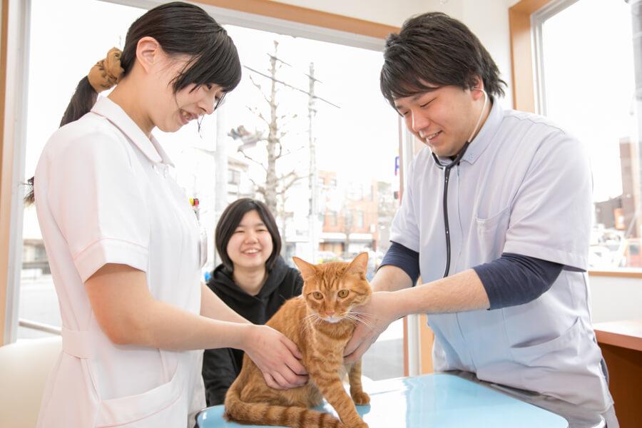 複数の医師が在籍し、さまざまな動物や疾患に対応