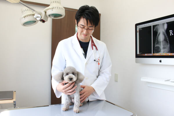 厚木キジュ動物病院のメイン画像