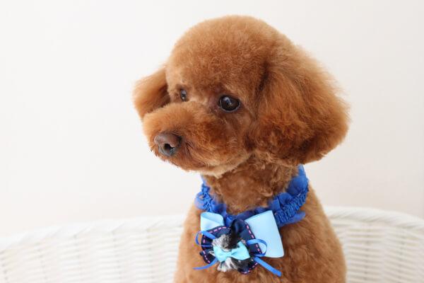 とりみんぐさろん TEDDY♡POO