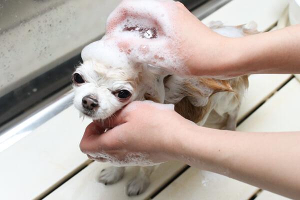 FINE DOGs(ファインドッグス)のシャンプー画像