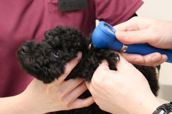 丁寧に説明が評判!安心して診察を受けられる動物病院