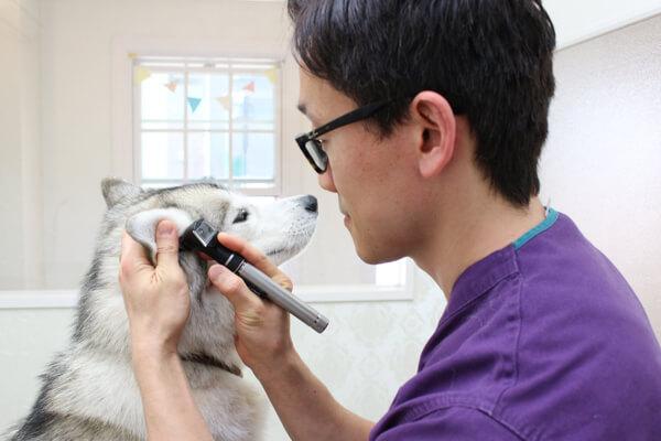 土日祝日も診察している動物病院