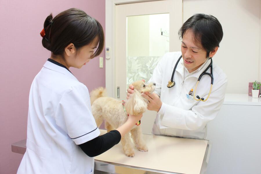 アンジェス動物病院の診療画像