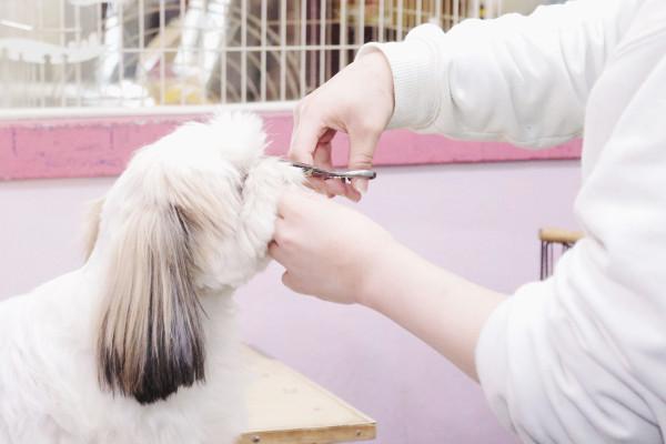 犬猫タラちゃんのトリミング画像
