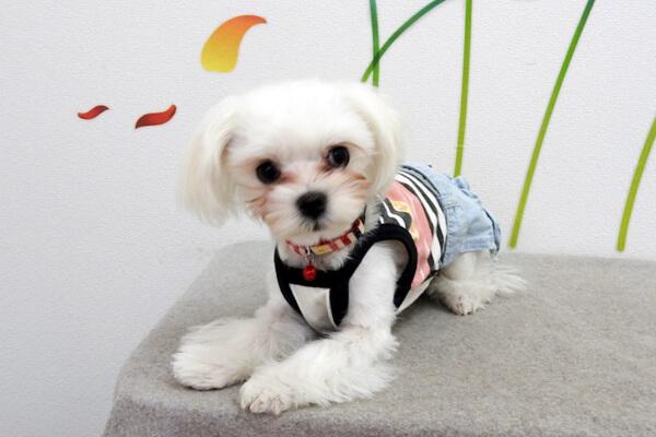 Sweet Tomboy Dog 犬写真