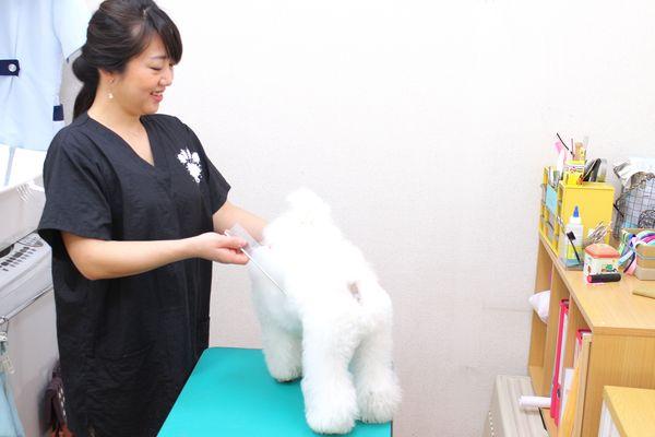 ペットの様子や体調を考慮して行うトリミングが人気