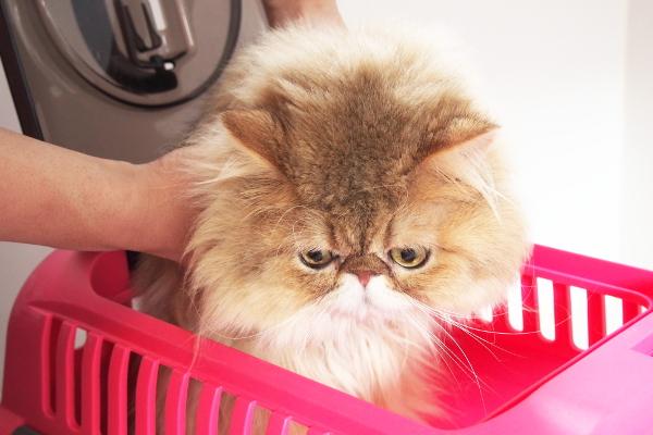 ネコちゃんが嫌がらないトリミング技術をぜひご体験ください。