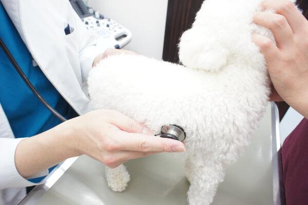 この地域に暮らす動物と飼い主さまにとって、頼られる動物病院を目指しています
