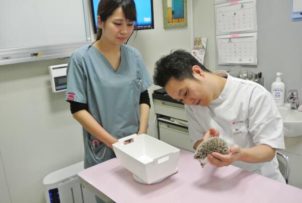 ハート動物クリニックの診療画像