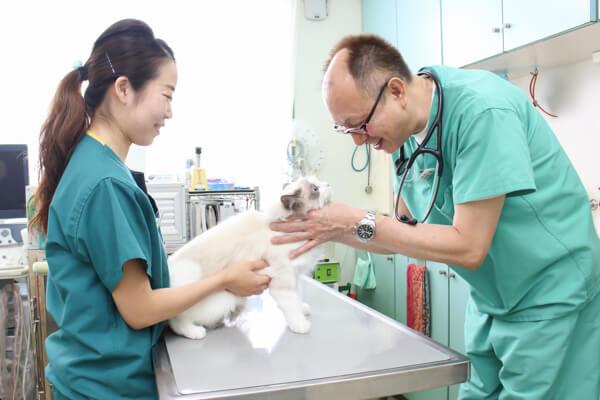 川口動物病院 診察写真