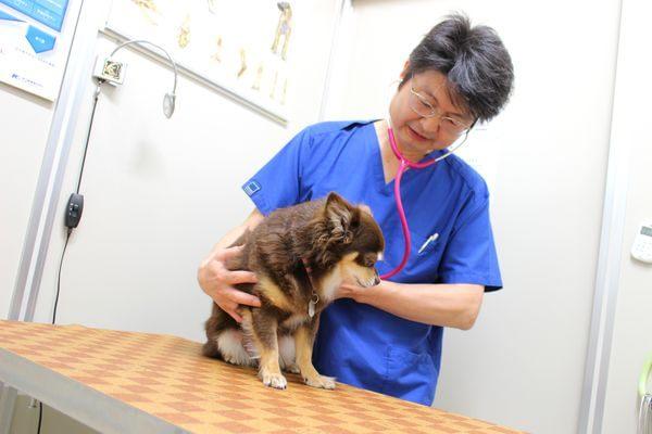 豊洲スマイル動物病院