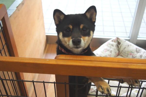 ペットショップムラカワ姫路井ノ口店 [ペットホテル]
