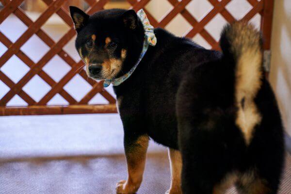 DOG CARE [ペットホテル]