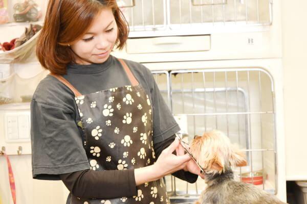 Dog wan [ペットホテル]