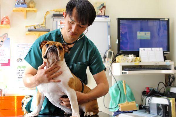 ワンちゃんとネコちゃんに特化した動物病院