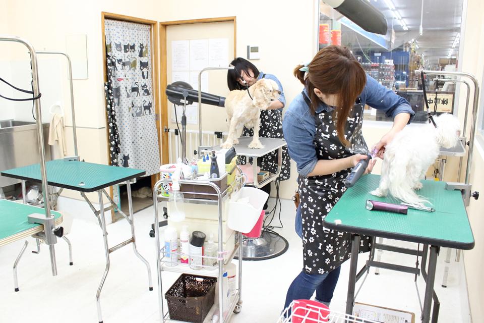 ハッピーベル野田店のトリミング画像