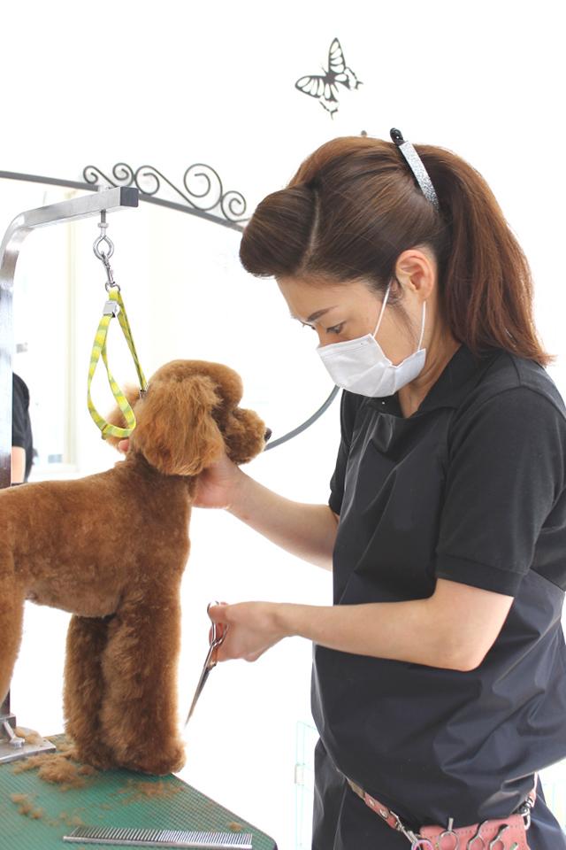 Dog salon Ange(ドッグサロン アンジュ)のメイン画像