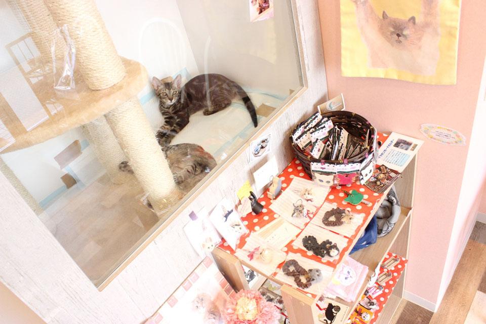猫の診療室モモのメイン画像