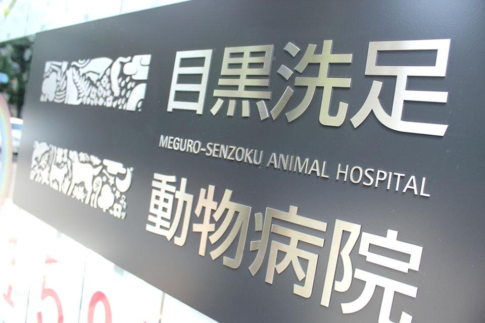 目黒洗足動物病院のメイン画像