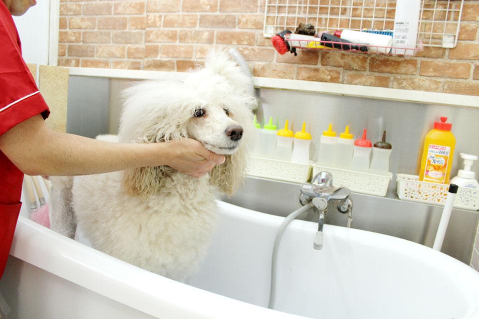 Love&Dog (ラブアンドドッグ)施術画像
