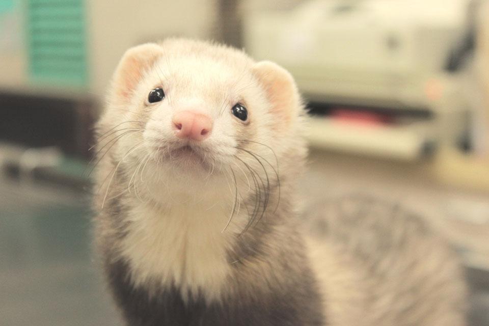 かわい動物病院のペット画像