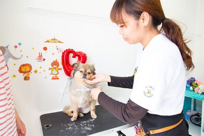 DOG SALON MILIMILIのトリミング画像