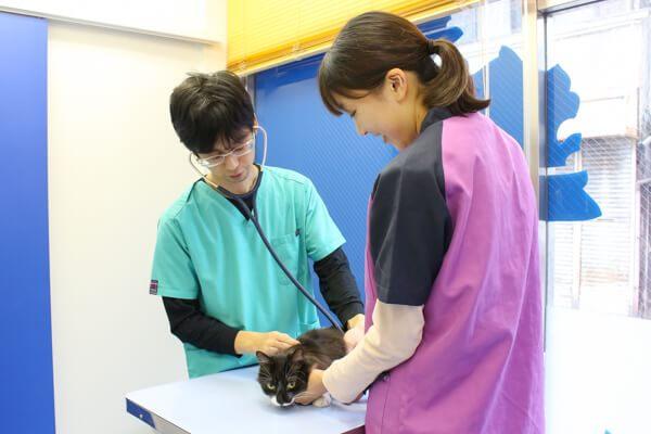 ゆめ動物病院